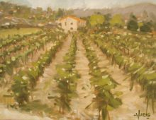 Vineyard near Les Baux